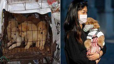 comer cachorros poderá ser proibido em cidade da China