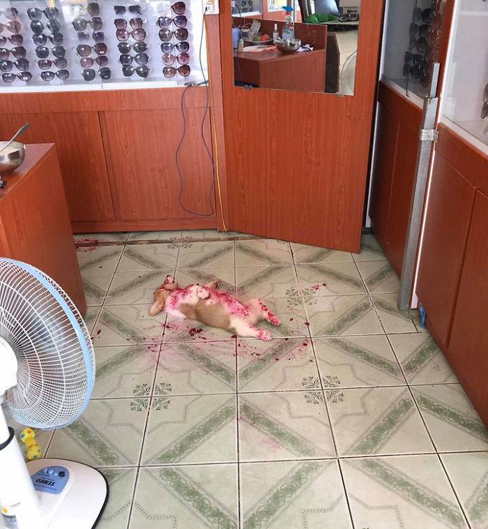 cachorro sujo de frutas