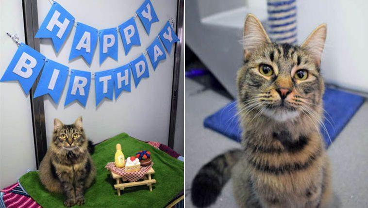 festinha de aniversário para gata