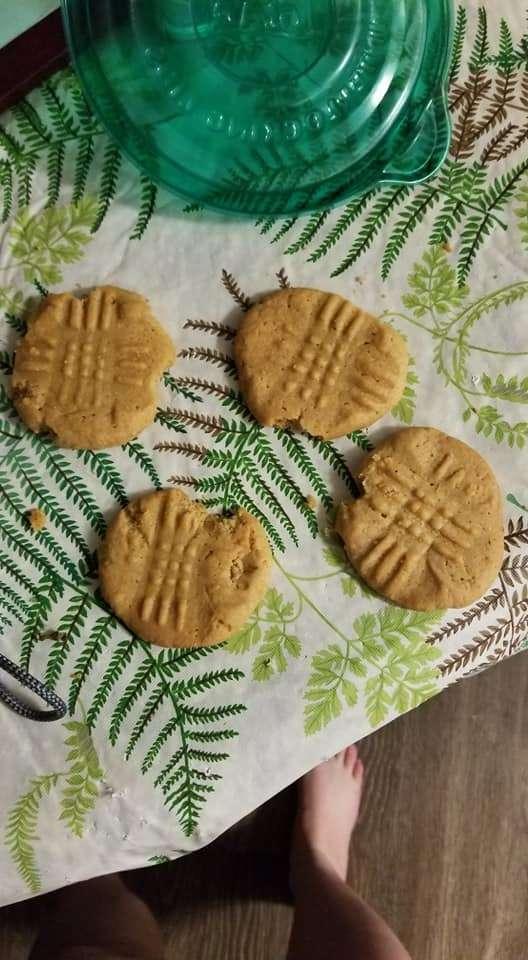 gata mordeu biscoitos