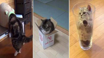 gatos tentando entrar em lugares apertados
