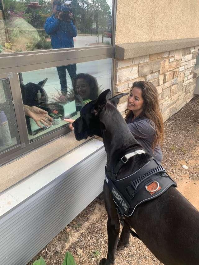 cão de terapia para idosos