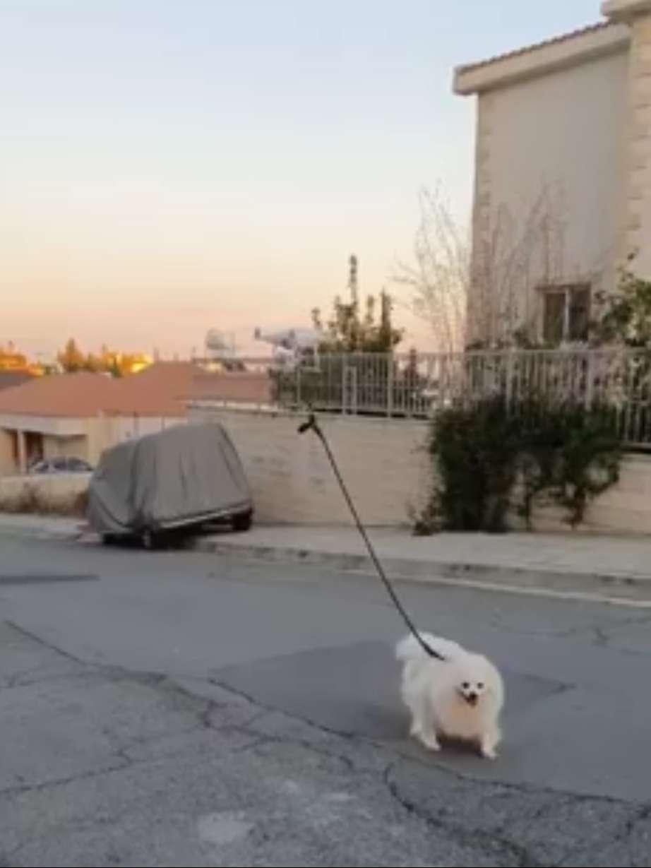 homem leva cachorro para passear com drone