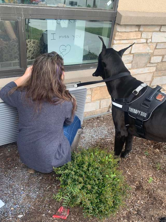 Cão terapeuta visita idosos em isolamento para mostrar carinho