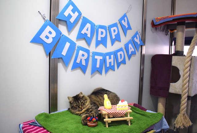 festa de aniversário para gata