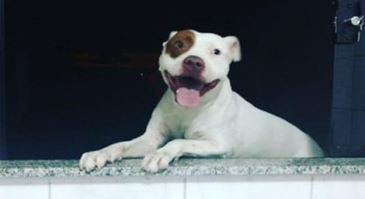 vizinho ameaçou matar cachorro