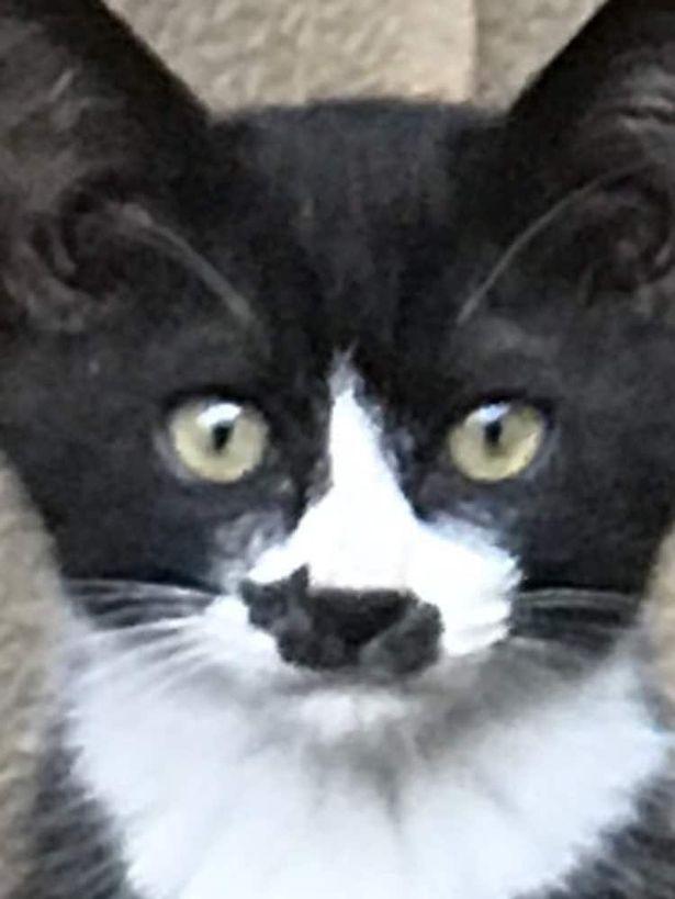 Gato com marca curiosa