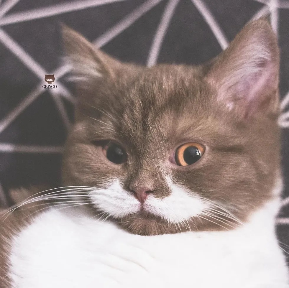 Gatinho com bigode