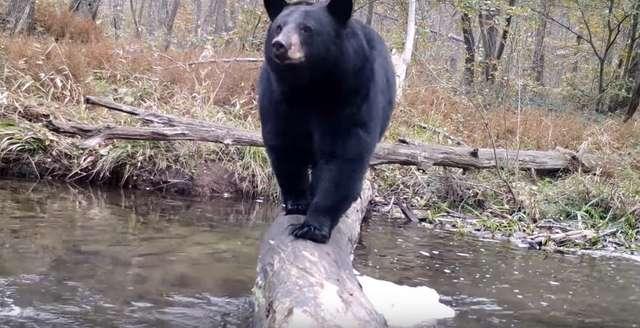 Câmera escondida na floresta