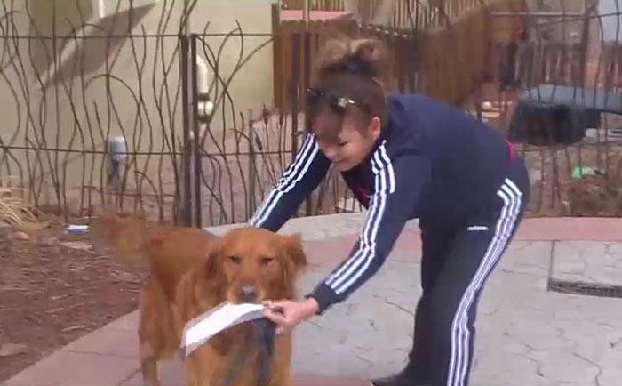 Cachorro entrega mantimentos