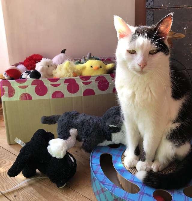 Gata decide que brinquedos devem ir junto