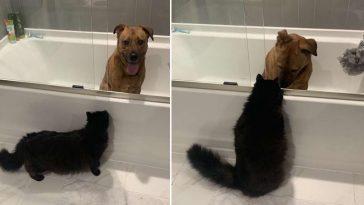 Gatinha acalma cadela com medo de trovões