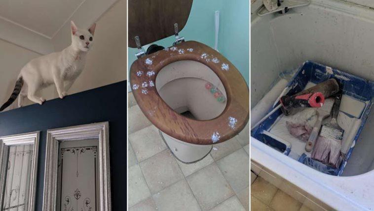 Gatinha redecorou a casa inteira após encontrar bandeja de tinta