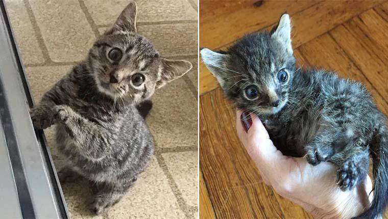 Gatinho minúsculo