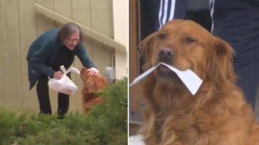 Golden retriever entrega mantimentos para vizinha idosa em isolamento