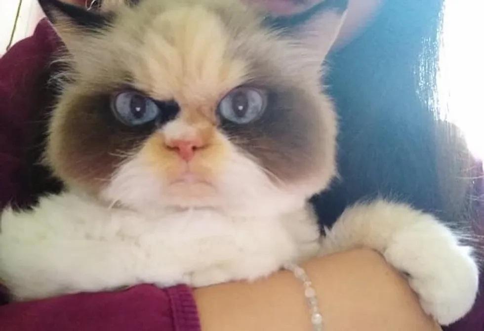 Novo Grumpy Cat