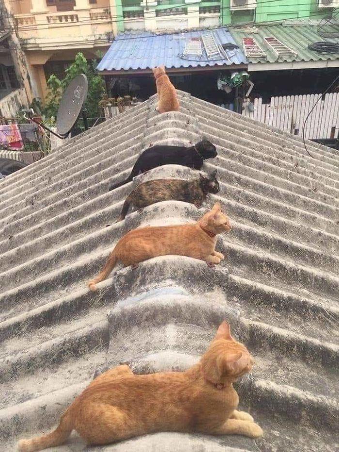 animais em isolamento social