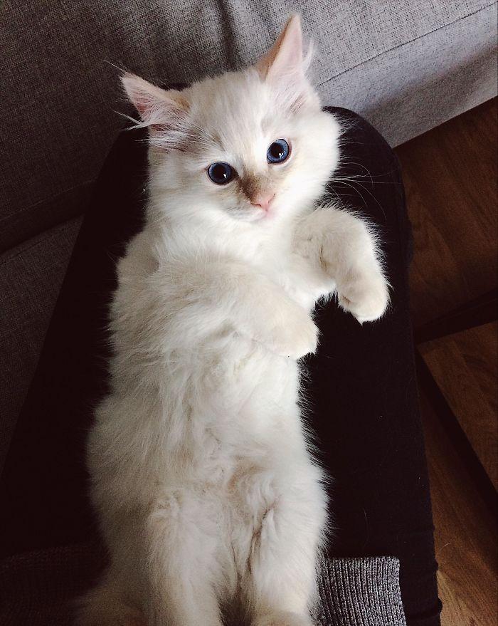 gatinho sozinho no apartamento