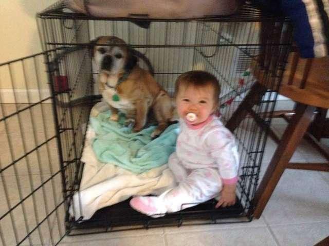 cartinha para cachorrinho