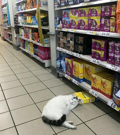 Gato dorme em loja