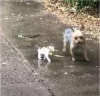 gatinho e cadela
