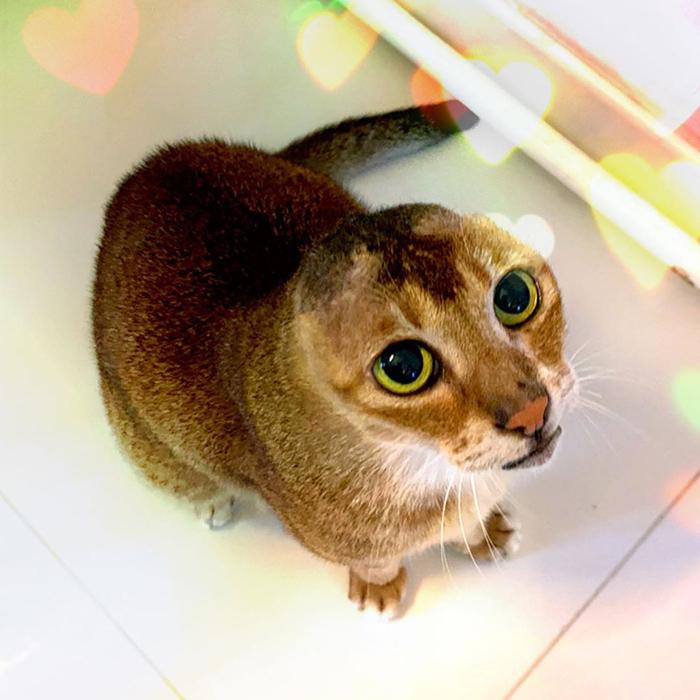 gato bonito