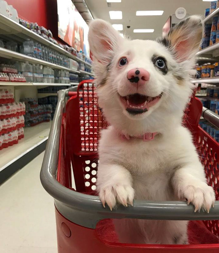 Cachorrinho feliz no mercado