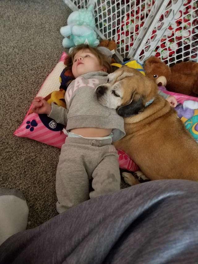 menina perde cãozinho