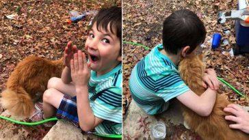menino fica emocionado com gato