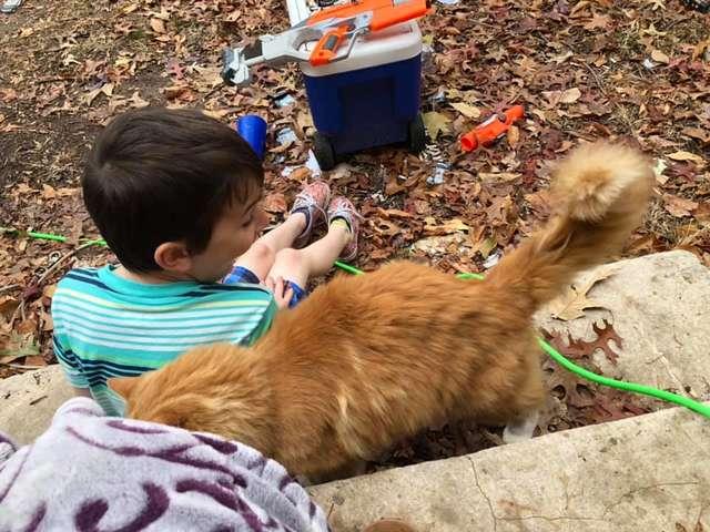 menino perde gatinho
