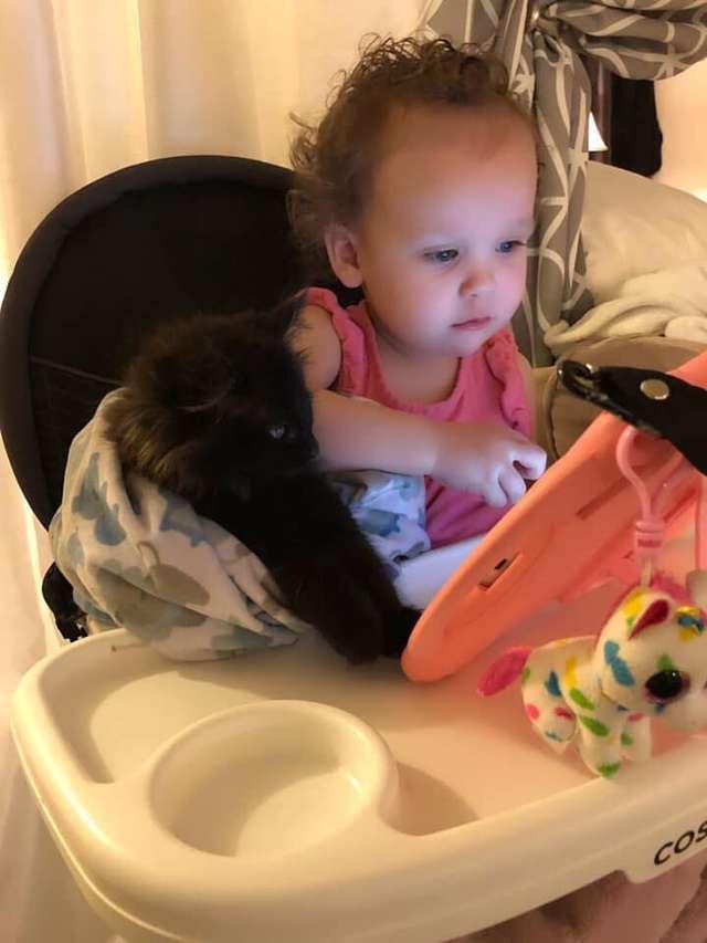 gato e menininha