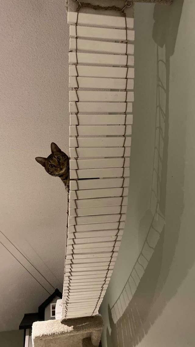 castelo de gatos caseiro