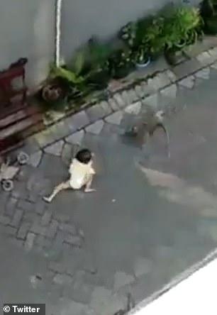 macaco sequestrando criança