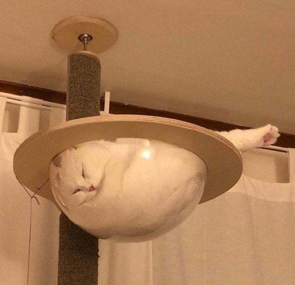 gatinhos pegando no sono engraçado
