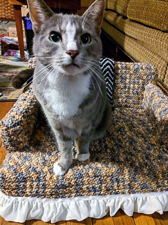 pequenos sofás de crochê para gatos
