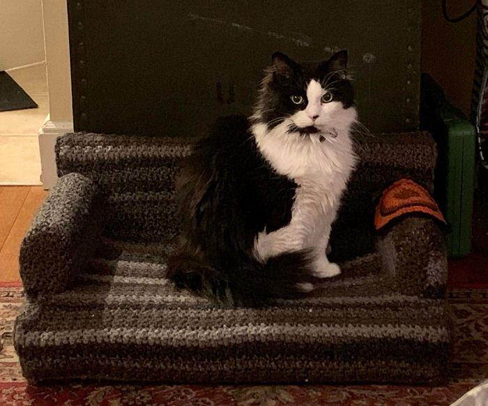 sofás para gatinhos