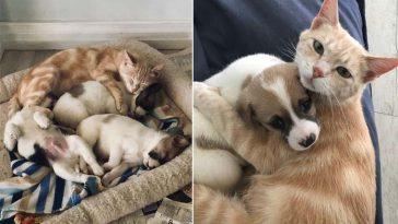 Gatinha perdeu os filhotes e adotou cachorrinhos