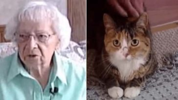 Gatinho salvou a dona idosa