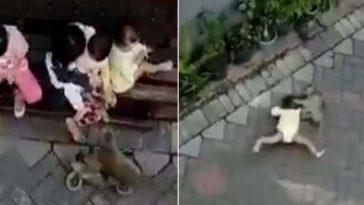 Macaco de moto tenta sequestrar criança