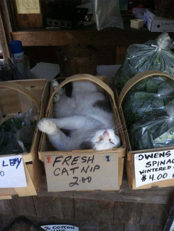 gatos dormindo engraçado