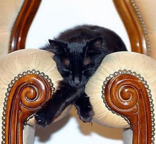 gatos pegam no sono