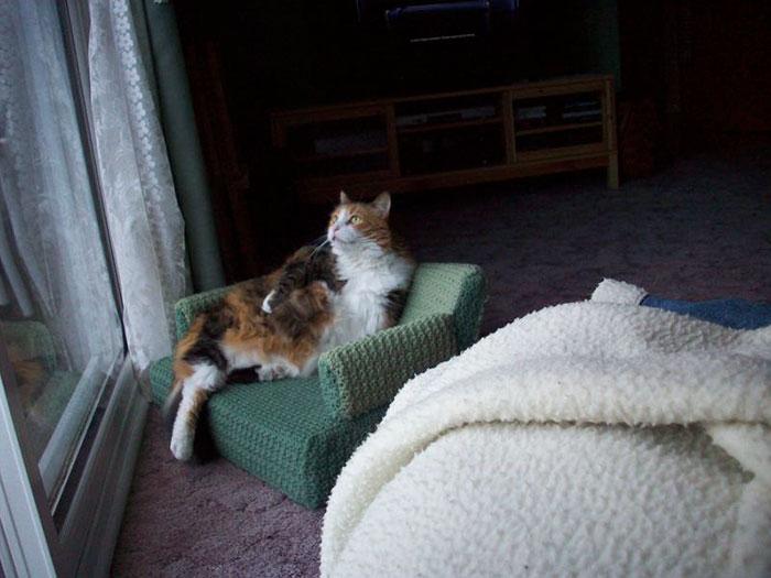 sofás para gatos