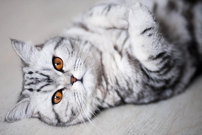 foto com gatinhos mais lindos do mundo