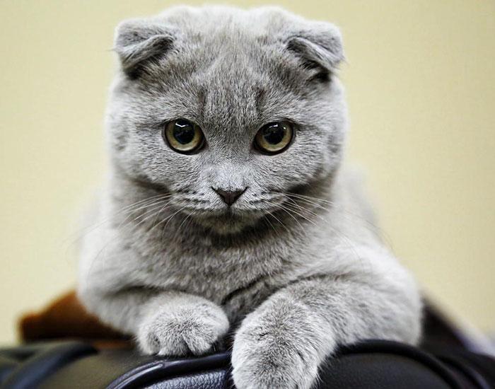 gatinhos mais lindos do mundo fotos