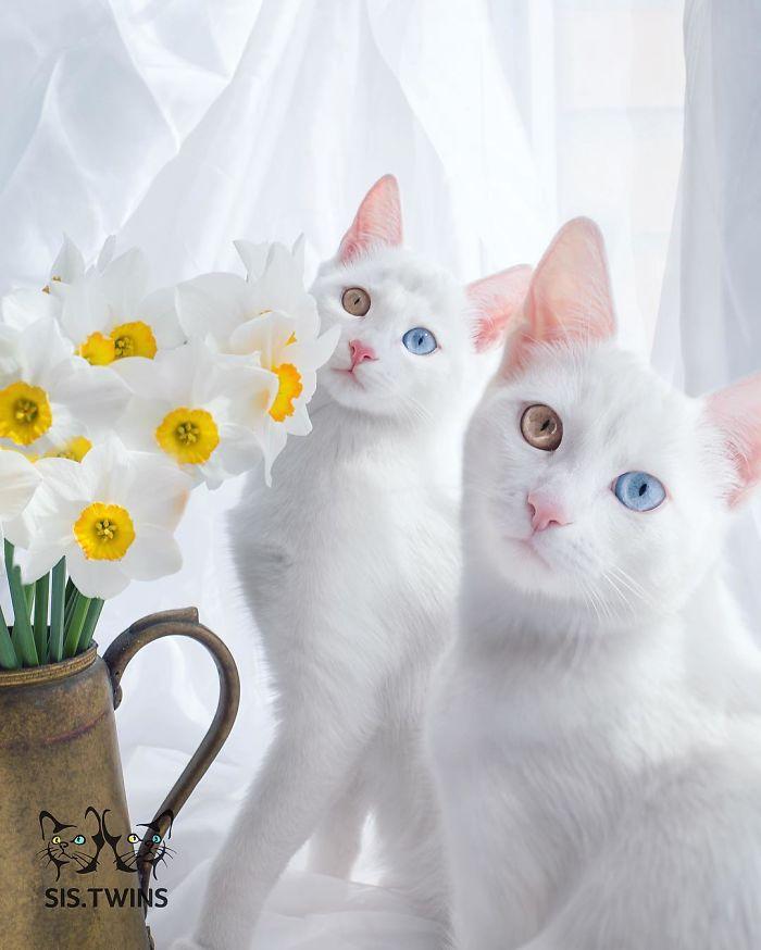 qual é o gatinho mais bonito