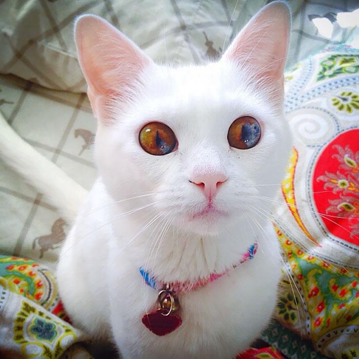 lindos olhos de gato