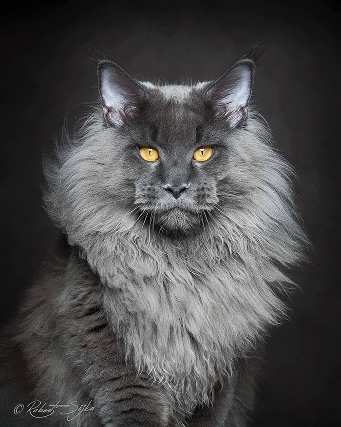 qual é o gato mais bonito