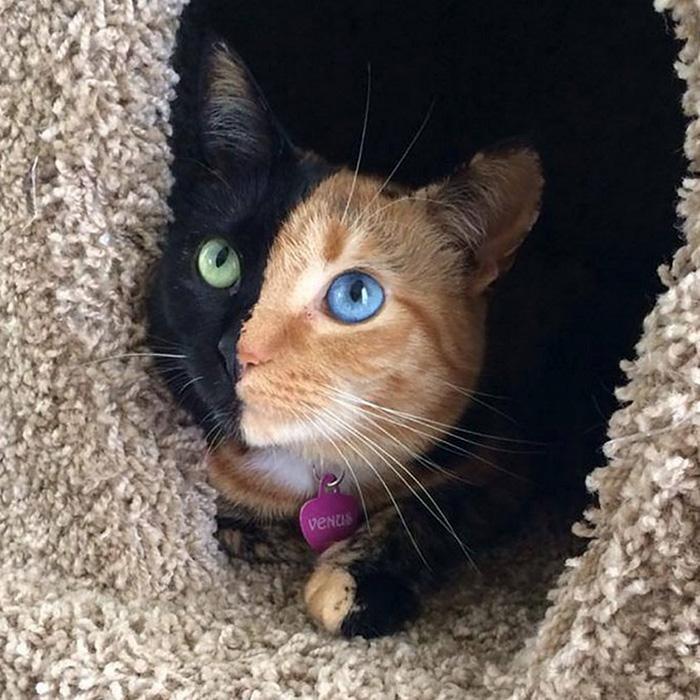 foto de gatinhos bonitos