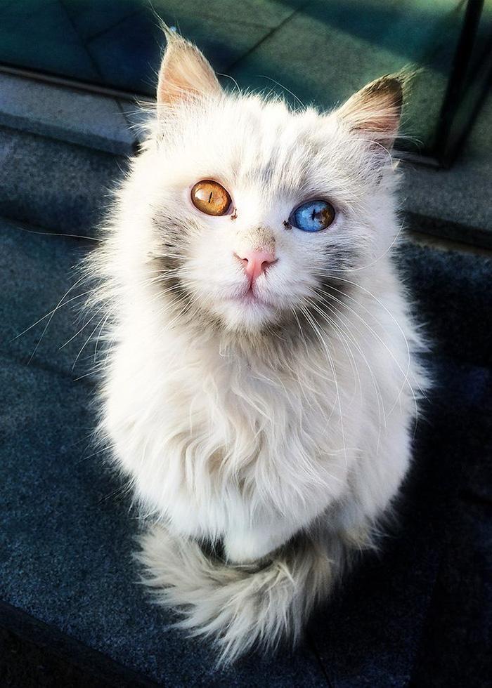 fotos de gatos bonitos