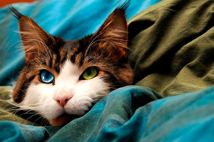 gatinhos bonitos